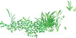 """影响世界的中国植物  ——尚德航头校区""""根系文化""""跨学科综合探究课程(二)图片_696898287454081973172991196020261297061887"""