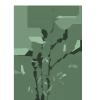 """影响世界的中国植物  ——尚德航头校区""""根系文化""""跨学科综合探究课程(二)图片_2535301200456458802993406410751"""
