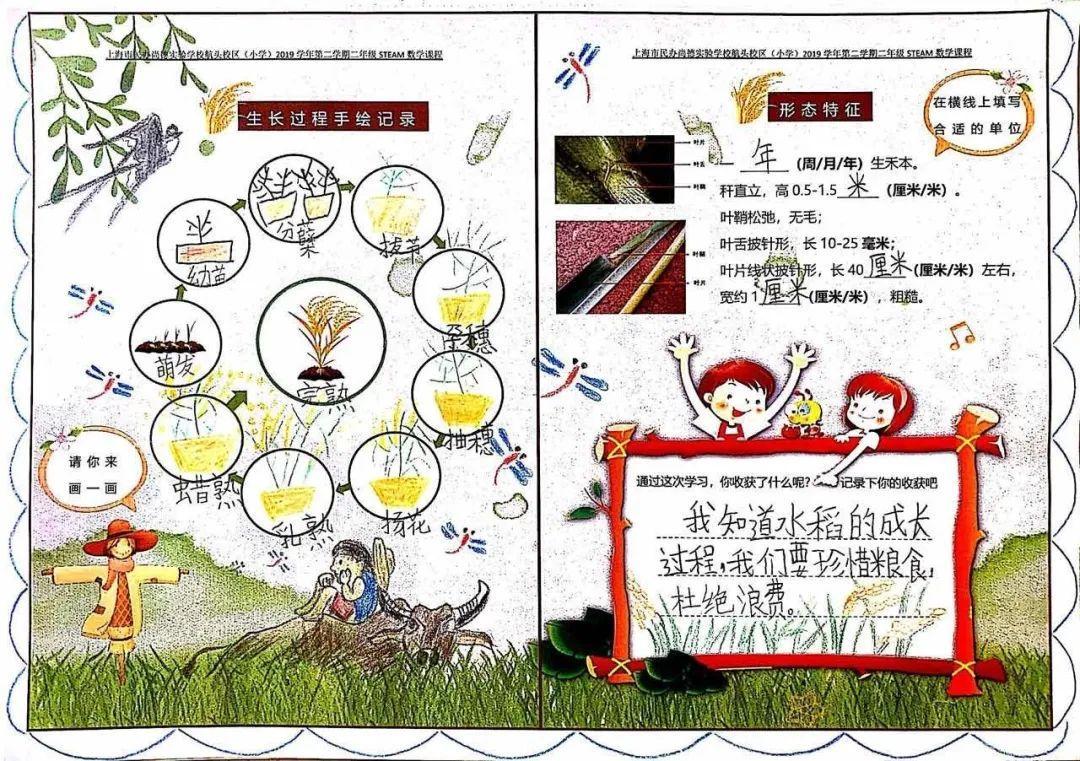 """影响世界的中国植物  ——尚德航头校区""""根系文化""""跨学科综合探究课程(二)图片_65535"""