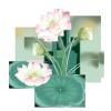 """影响世界的中国植物  ——尚德航头校区""""根系文化""""跨学科综合探究课程(二)图片_4398046511103"""