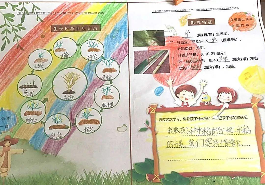 """影响世界的中国植物  ——尚德航头校区""""根系文化""""跨学科综合探究课程(二)图片_131071"""