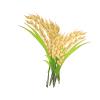 """影响世界的中国植物  ——尚德航头校区""""根系文化""""跨学科综合探究课程(二)图片_1023"""
