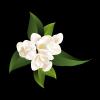 """影响世界的中国植物  ——尚德航头校区""""根系文化""""跨学科综合探究课程(二)图片_356811923176489970264571492362373784095686655"""