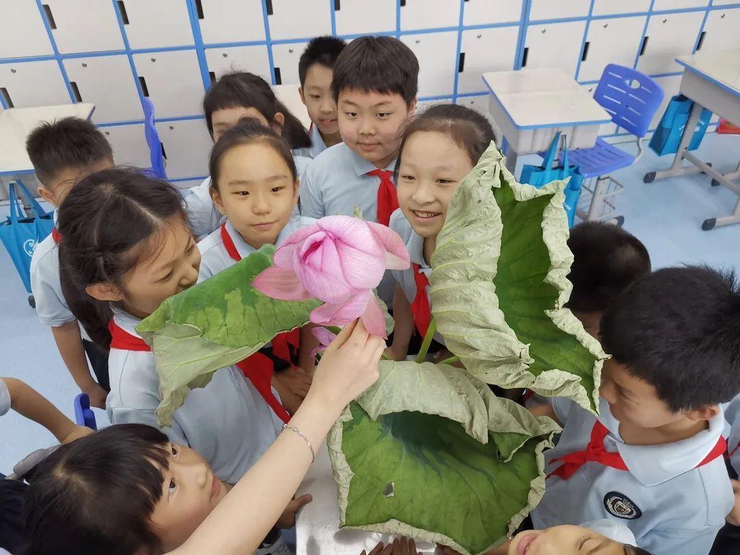 """影响世界的中国植物  ——尚德航头校区""""根系文化""""跨学科综合探究课程(二)图片_2305843009213693951"""