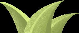 """影响世界的中国植物  ——尚德航头校区""""根系文化""""跨学科综合探究课程(二)图片_89202980794122492566142873090593446023921663"""