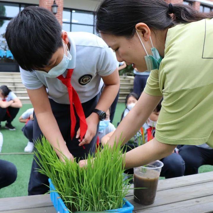 """影响世界的中国植物  ——尚德航头校区""""根系文化""""跨学科综合探究课程(二)图片_1099511627775"""