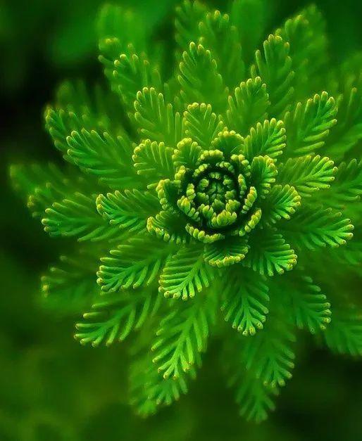 """影响世界的中国植物  ——尚德航头校区""""根系文化""""跨学科综合探究课程(二)图片_1"""